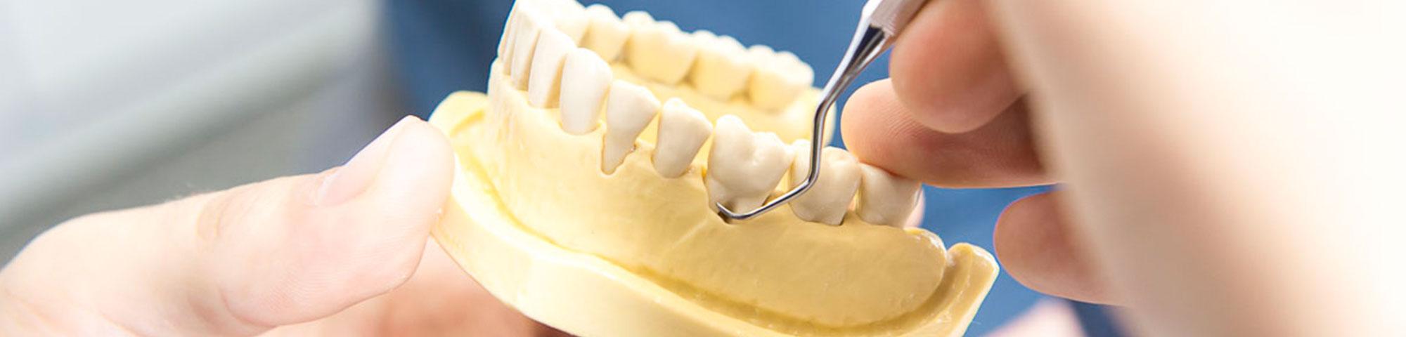 Anatomie - Zahnarzt Ratingen